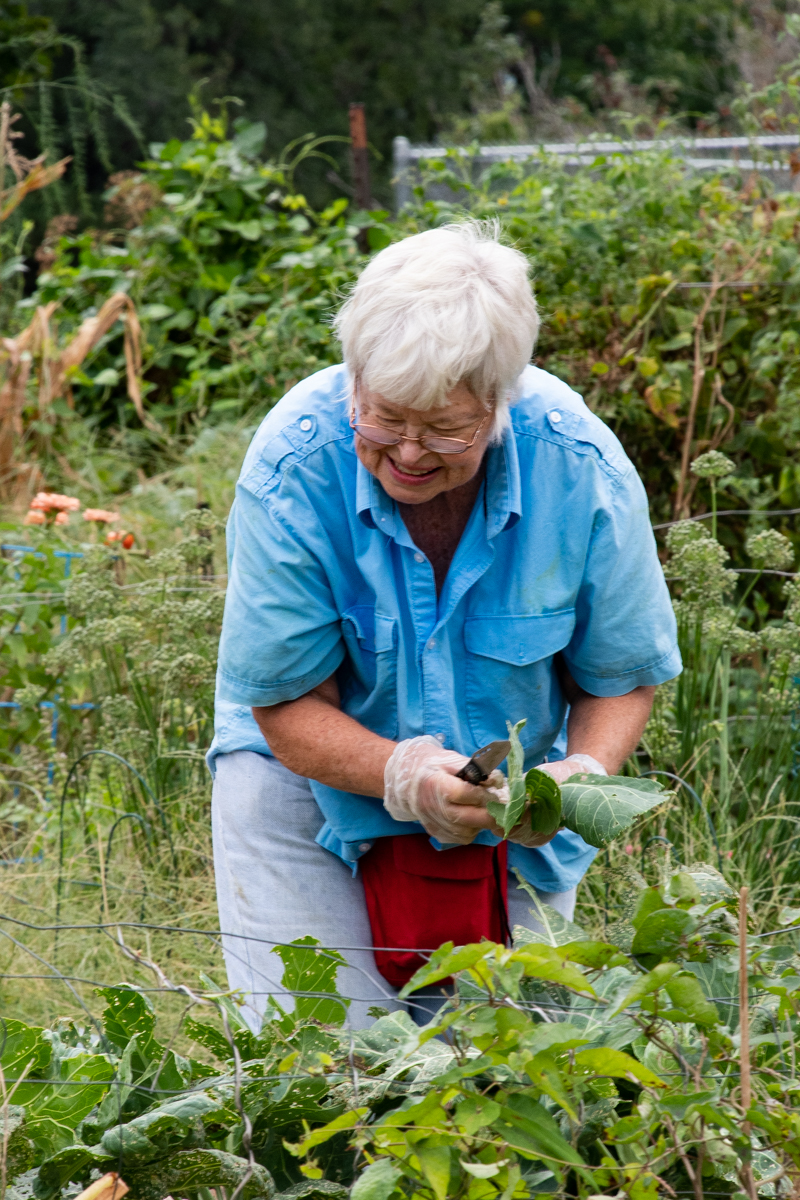 September 21, 2019:  Organizer and driving force of the Church of the Master community garden, Susie Hollman, takes time to work on her own garden.